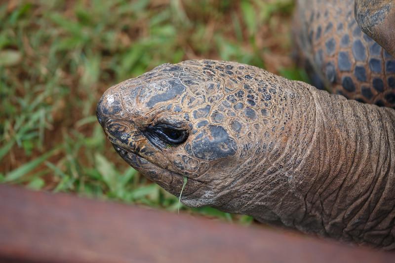 Queensland, Australia Zoo - Giant tortoise