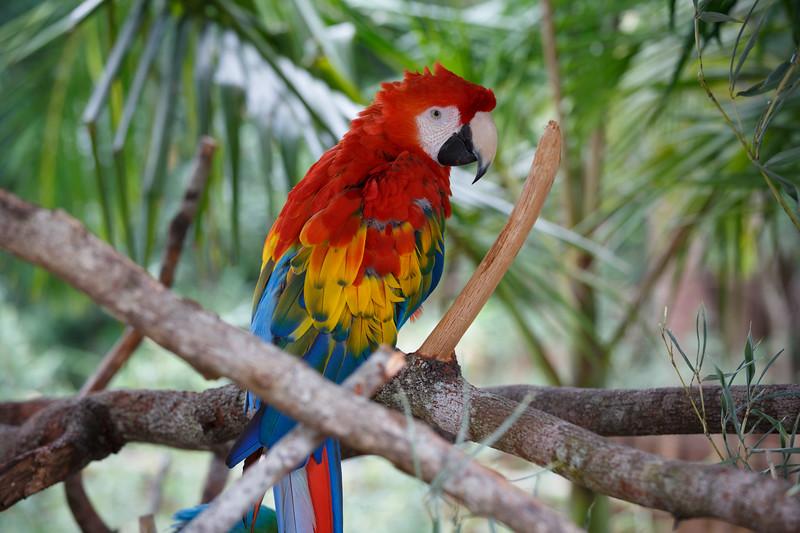 Queensland, Australia Zoo - Rainbow parrot