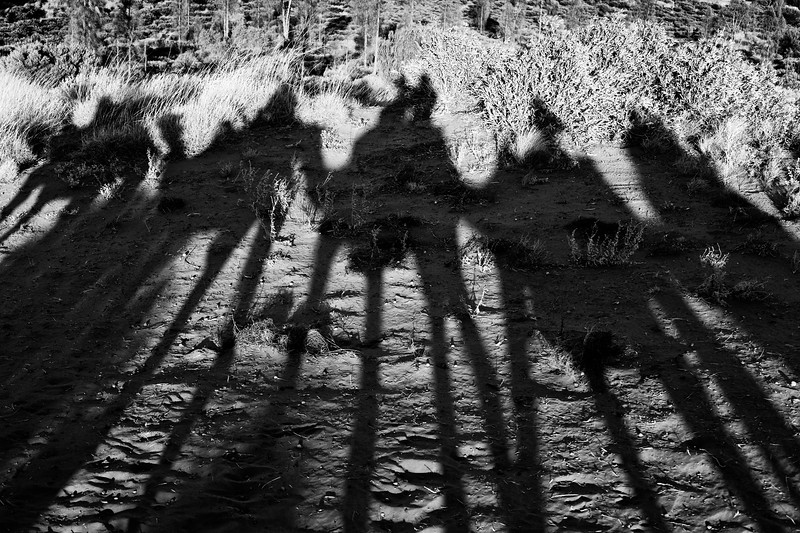 Northern Territory, Uluru - Shadows of camels and riders, black and white