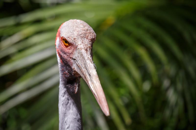 Queensland, Australia Zoo - Angry looking bird
