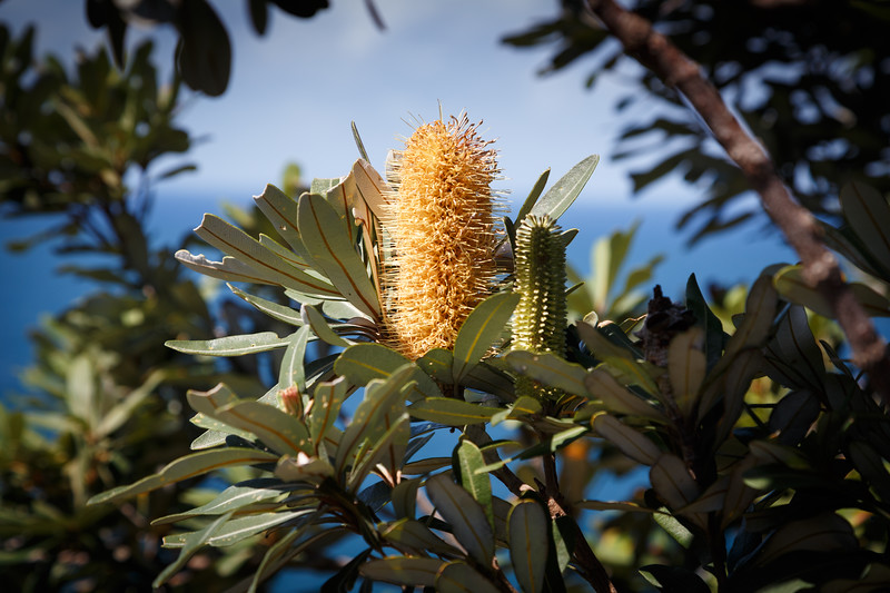 New South Wales, Byron Bay - Weird plant