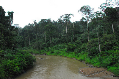 Danum Valley