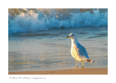 Sea Gull, The Pinery Provincial Park, Ontario, Canada