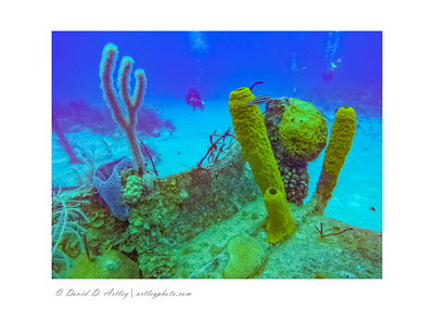 Sponge and coral, wreck of the Oro Verde, Grand Cayman Island
