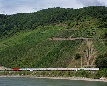 The Rhine Gorge has a lot of steep vineyards, train tracks on either side of the river, and castles overlooking the river.