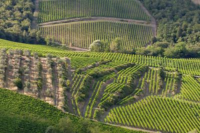 Panzano Vineyard Designs 6581