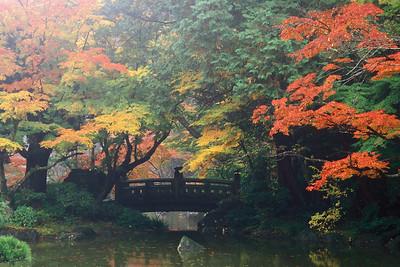Japanese Fall 2 JPN2G