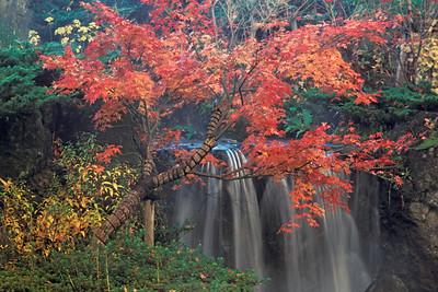 Japanese Garden JPN2D
