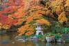November Garden JPN2H