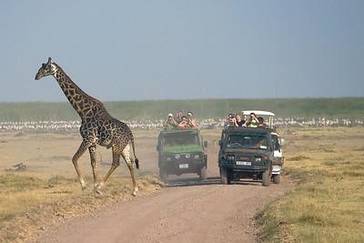 Giraffe Gawkers 4158