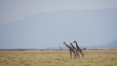 Three plus Two, Lake Manyara 4155