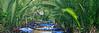 Tropical Overpass 4321p