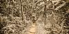 Jungle Puzzle 4171csp
