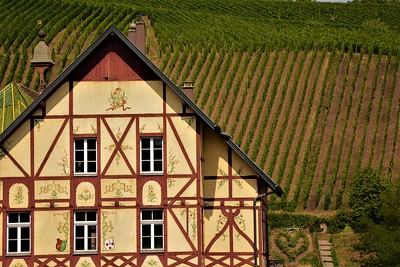 Vineyard Backdrop--Riquewihr, France