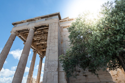Erechtheion and an Olive Tree