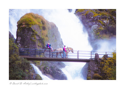 Fjord Pony pulling pony trap over waterfall on ride to base of Briksdal Glacier, Stryn, Norway