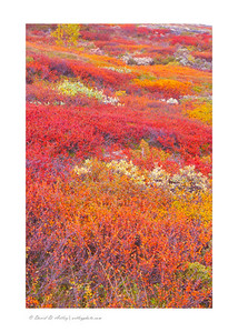 Autumn colors, Doverfjell National Park, Norway