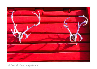 Antlers on cabin walls, Doverfjell National Park, Norway