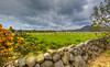 18  Stone Fences, Sheep, Green Pasture, and the Mourne Mountains, Northern Ireland