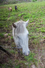 Connemara Pony and Friends