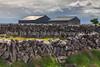 119 Stone Fences Of The Burren