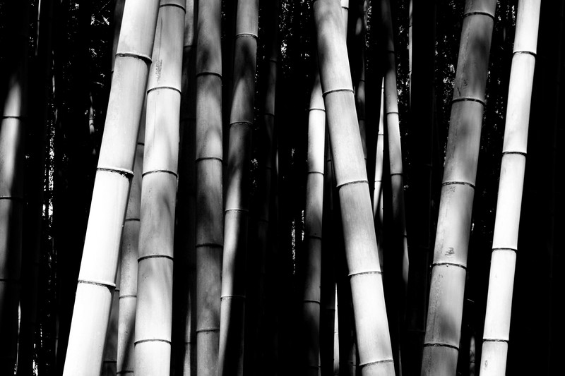 Japan, Kyoto - Bamboo stalk abstract (black and white)