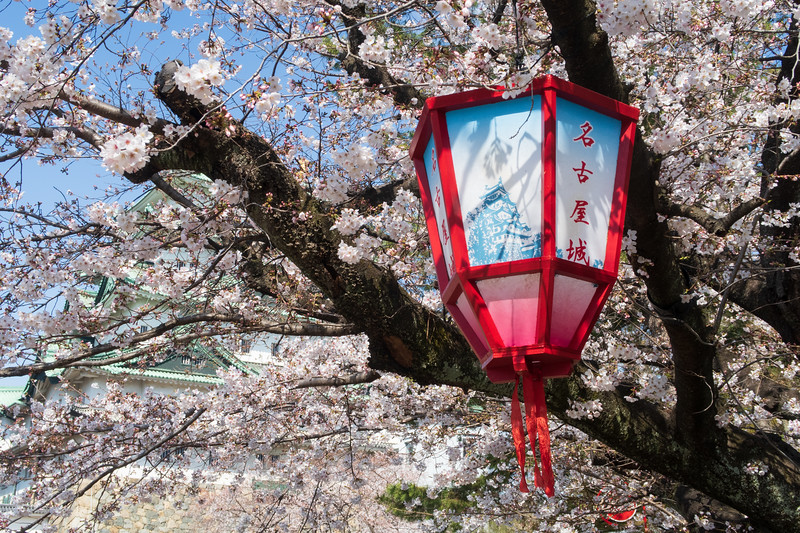 Japan, Nagoya - Nagoya Castle and latern and cherry blossoms