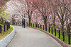 Japan, Nagoya - Higashiyama botanical gardens with cherry blossoms