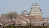 Japan, Himeji - Himeji Castle and cherry blossoms
