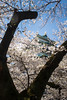 Japan, Nagoya - Nagoya Castle with cherry blossom tree