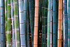 Japan, Kyoto - Bamboo stalk abstract (color)