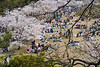 Japan, Himeji - Hanami with cherry blossoms