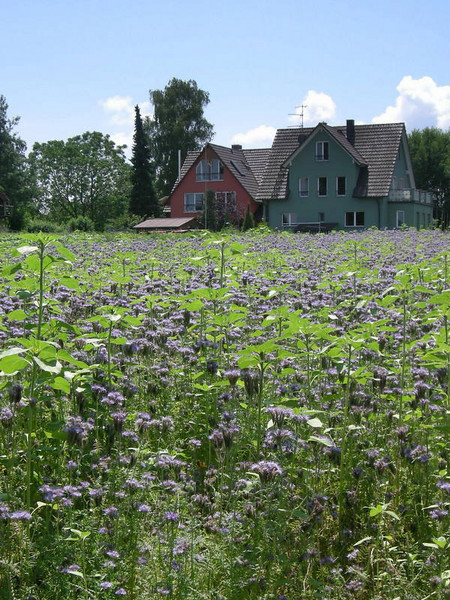 Homes and flowers on Reichenau