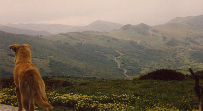 The Mountains near Algeciras