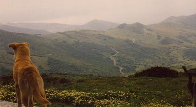 The Mountains near Algeciras