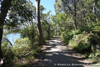 Walking into Sydney Harbour National Park