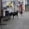 Chennai street dogs