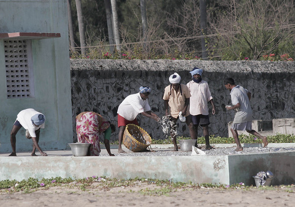 Drying fish on concrete slabs