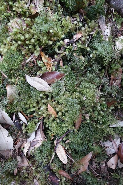 Mossy goodness