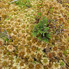 Cool groundcover