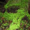 Lichen was neon!