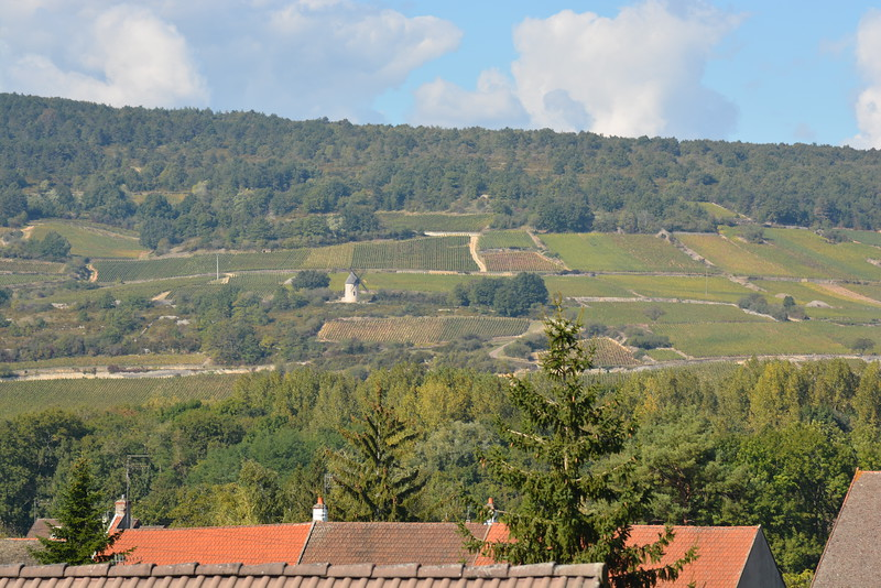 Vineyards of Santenay