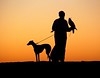 An Arab falconer at sunset with his Gyrfalcon and his Saluki. Thanks to Reza Kiamarzy for helping me to get this image.