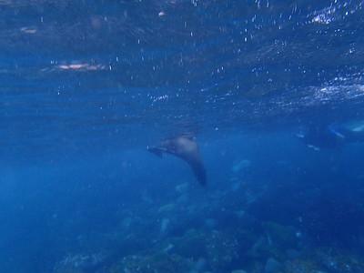 Galapagos Day 11 - Gardner Bay & Gardner Island