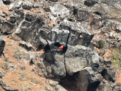 Galapagos Day 14 - North Seymour Island