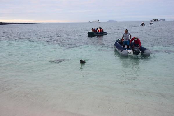 Galapagos Day 15 - Mosquera Islet