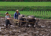 Rice Farmers Harvesting Rice, Yunnan Province, China, Asia, Asian