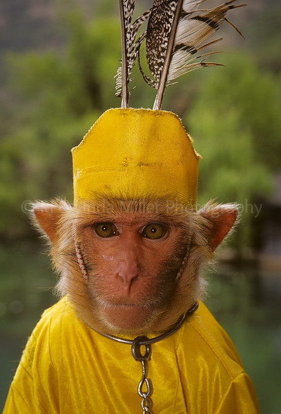 Monkey Dressed in Yellow, Black Dragon Pool Park, China, Asia, Asian