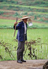 Man Working in Rice Field, Yi-Seven Star Village, Yunnan Province, China, Asia, Asian