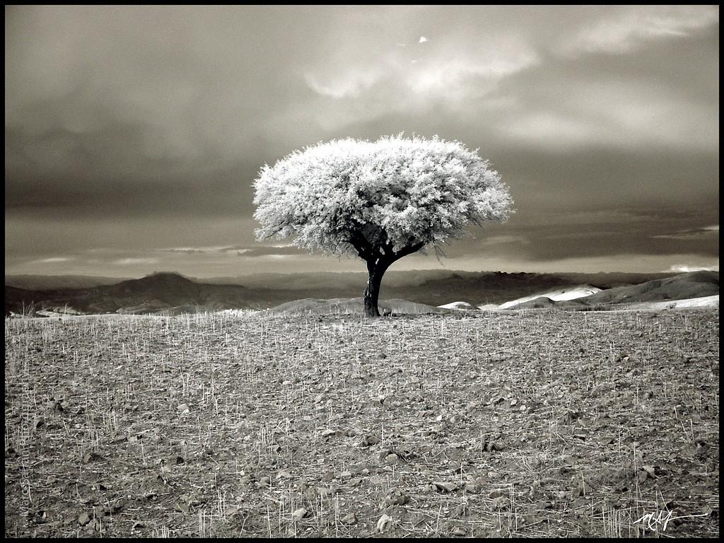 Landscape<br /> Bolivia